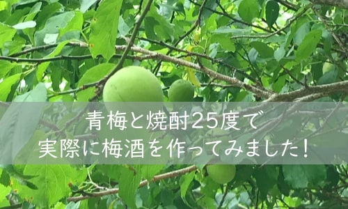 梅酒の作り方 人気 青梅 焼酎25度